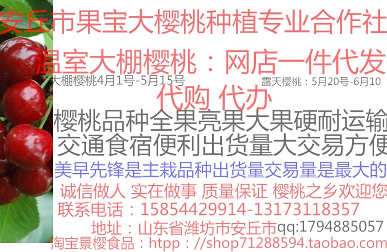山东潍坊安丘大樱桃种植交易基地温室大棚樱桃代购代办