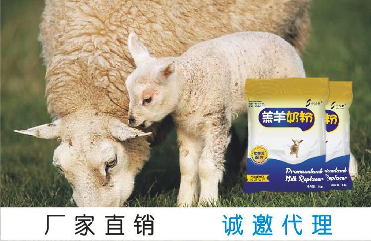 中博特牌羔羊奶粉养殖户首选品牌