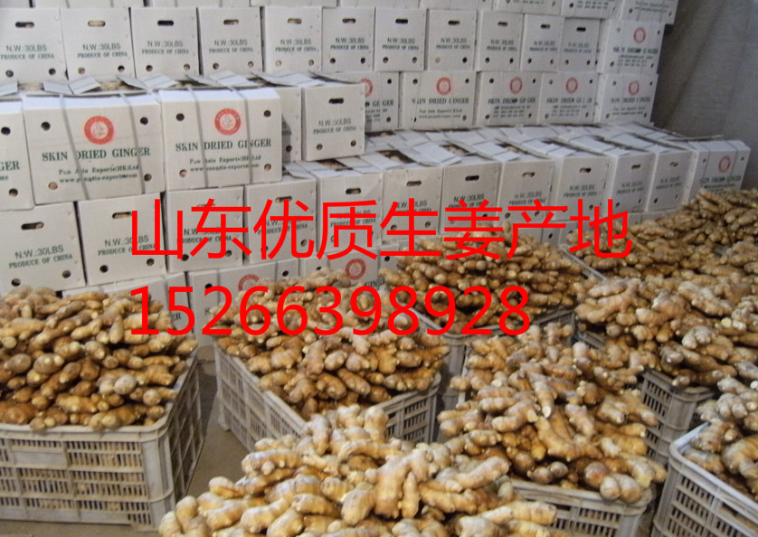 优质大黄姜小黄姜批发产地山东生姜价格今日行情专业出售新姜,泥姜,红头姜