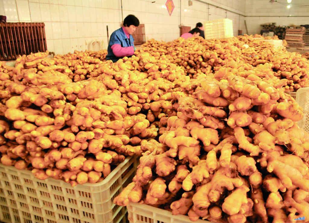 全国优质生姜价格趋势,优质生姜产地